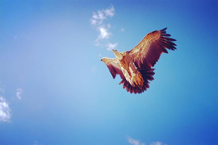 チベット仏教で行われる鳥葬は日本でもできる?鳥葬を行う理由を徹底解説!