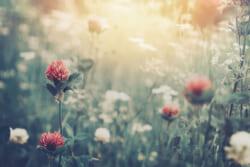 「草葉の陰」言葉の意味と語源|実際の使い方と英語表現も解説