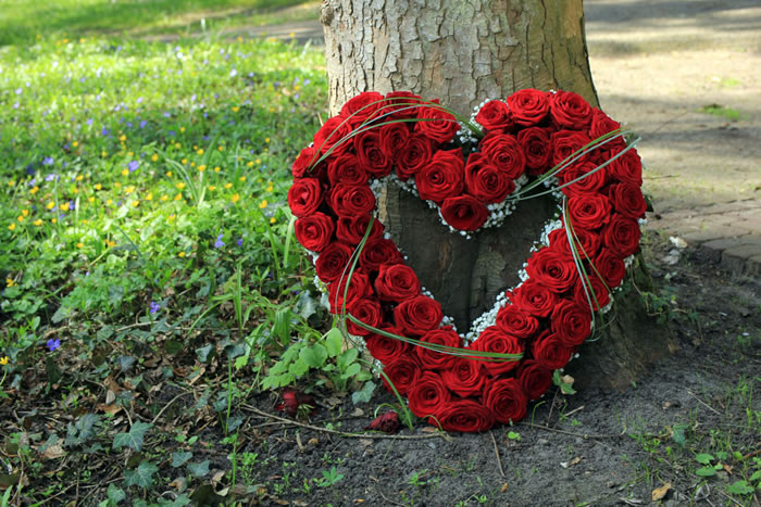 多様化する自然葬|それぞれの種類や特徴を解説