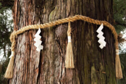 依り代とは?依り代の意味や種類、神道との関係をわかりやすく解説