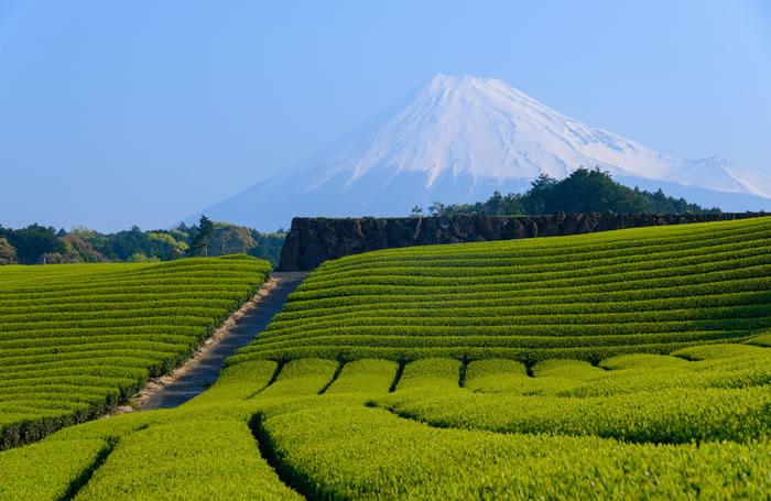 静岡県の葬儀は合理的?香典の中身をその場で確認するなどの特徴的な慣習