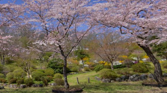 「冨士霊園」 静岡県駿東郡|日本さくら名所100選にも選ばれた民間の公園墓地